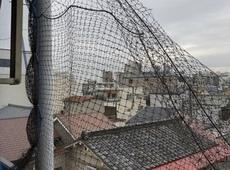 生野区 鳩除けネット設置